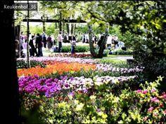 Spring Flower Sampler One slide show of new product post over 100 images.