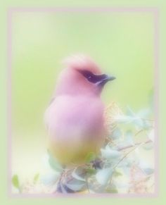 In my field of paper flowers and candy clouds of lullaby. Pretty Birds, Beautiful Birds, Simply Beautiful, Soft Colors, Pastel Colors, Light Colors, Soft Pastels, Pastel Art, Pretty Pastel