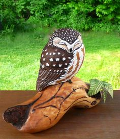 Saw-whet Owl Siesta - Artwork by Tim McEachern.