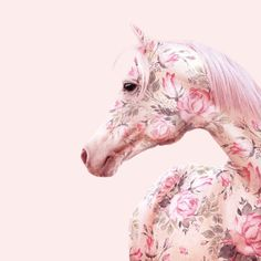Floral Horse Canvas Art by Paul Fuentes Pink Love, Pretty In Pink, Hot Pink, Paul Fuentes, Horse Wall Art, Pastel Flowers, Pastel Floral, Flower Wall Decor, Animal Nursery