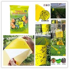 Sticky Insect Glue Traps; 2417cm/2025cm/2040cm/Customized Sizes; Opp Bag or Color Box Packing ; Contact us for your own brand now !!! Email: stephy@cnninger.com Whatsapp:86 18867650058 www.cnninger.com