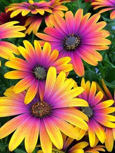 How to Plant Potted Flowers Outdoors in the Soil : Garden Space – Top Soop Flowers Nature, Exotic Flowers, Amazing Flowers, My Flower, Pretty Flowers, Flower Art, Beautiful Flowers Pictures, Colorful Flowers, Purple Flowers