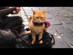 """▶ """"A Street Cat Named Bob"""" The Big Issue cat   Es tal la expectación generada con el libro """"Un gato callejero llamado Bob"""" que alrededor de sus actuaciones callejeras hay cámaras grabándoles cada poco. Este es un ejemplo."""
