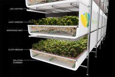 Advanced Aerponic System | Vertical Farming | AeroFarms