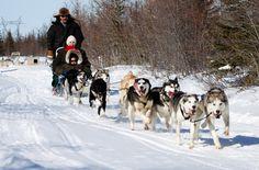 Dogsledding Excursion - Northern Lights & Winter Nights