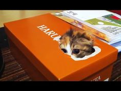 Kittens Playing in Boxes - Neatorama