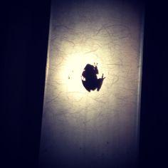 Little frog friend!