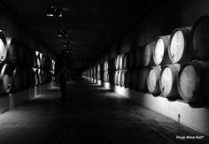 Nice Remelluri cellar
