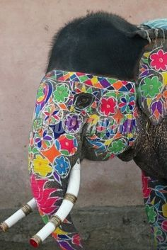 Decorated elephant at the annual elephant festival in Jaipur, India