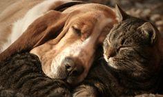 Waarom je altijd je hond/kat mee naar bed moet nemen