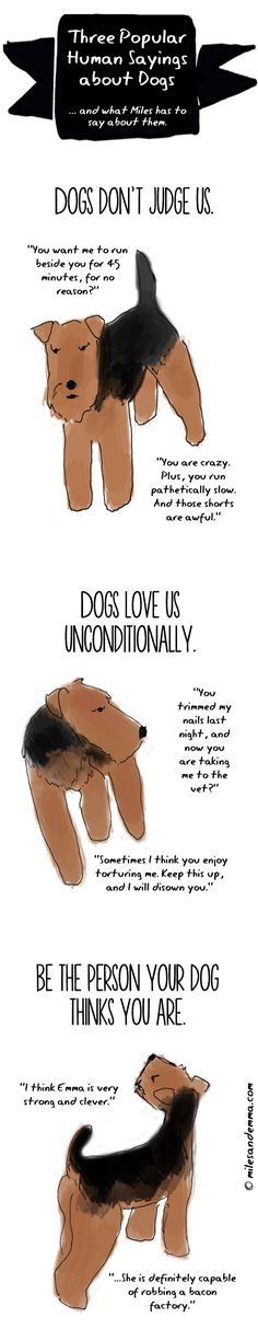 Three Popular Sayings about Dogs ...and what Miles has to say about them. - Miles & Emma