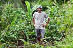 Organic Farming in NegrosPortrait of Ariel de la Cruz, an organic farmer in Negros. He plants eggplant, lettuce, corn, rice, banana, and herbs at his farm. Greenpeace believes facilitating people's access to a varied diet of ecologically farmed foods, through home and communal gardens is the most effective and sustainable solution to tackle nutrition deficiency in the long term. © Andri Tambunan / Greenpeace