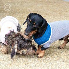 Dog Sweaters, Dog Coats, Little Darlings, Dachshund, Merino Wool, Cute Animals, Wiener Dogs, Pets, Pretty Animals