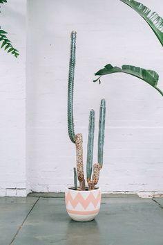 ✿* Cactus *✿* Suculentas *✿ little cactus Cactus Planta, Cactus Y Suculentas, Pop And Scott, Deco Nature, Plants Are Friends, Cacti And Succulents, Succulent Planters, Succulents Garden, Hanging Planters