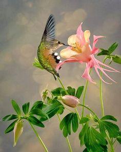 Beautiful honey bird photography http://webneel.com/25-most-beautiful-bird-photography-examples-and-tips-photographers   Design Inspiration http://webneel.com   Follow us www.pinterest.com/webneel