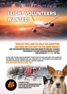 Are you booked to fly FROM Thailand to the US or Canada? Find out if you can help an adopted dog get home! Please EMAIL flightvolunteer@soidog.org. https://www.facebook.com/SoiDogPageInEnglish/posts/1765349643506763