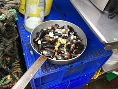 Scotland - Oban: Would you like some mussels?. 2016