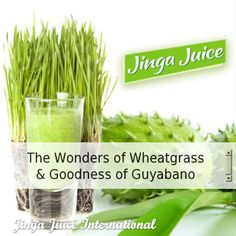 What Is Wheatgrass? How to Make a Wheatgrass Smoothie Easy Smoothie Recipes, Easy Smoothies, Juice Drinks, Healthy Drinks, Smoothie Packs, Wheat Grass, Cancer Cure, Detox Tea, How To Stay Healthy
