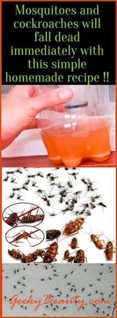 Mosquitoes and cockroaches will fall dead immediately with this simple homemade … – The Environmental Alternative For Safer Pest Control Home Remedies, Natural Remedies, Health Remedies, Roach Remedies, Flea Remedies, Mosquito Spray, Pest Spray, Healthy Exercise, Insect Repellent