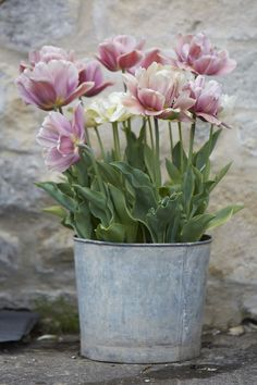 tulips-in-a-zinc-planter-britt-willoughby-dyer-gardenista.jpg