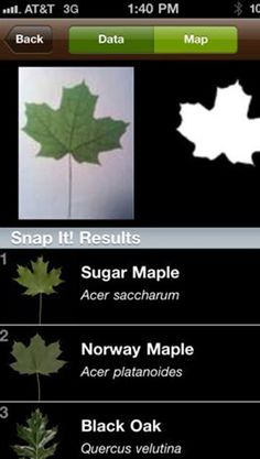 The 2 Best Apps To Find Fall Foliage - love both of these apps! #fallcolors
