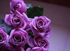 flowers, rose, and purple image All Flowers, Amazing Flowers, Beautiful Roses, My Flower, Purple Flowers, Beautiful Flowers, Flowers Pics, Candy Flowers, Colorful Roses