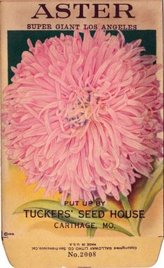 Items similar to ASTER! (Super Giant Los Angeles) Vintage Flower Seed Packet Tuckers Seed House Lithograph (Carthage, Missouri) on Etsy Vintage Images, Vintage Art, Vintage Seed Packets, Seed Catalogs, Paper Illustration, Carthage, Flower Pictures, Flower Seeds, Vintage Flowers