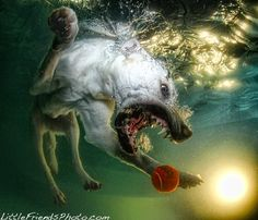 Underwater Photographs of Dogs Swimming