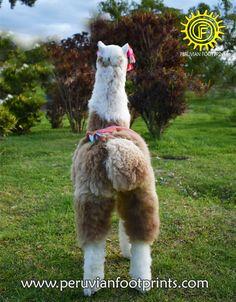Stuffy alpaca big 47 brown and white Alpaca Fur Stuffed | Etsy Alpaca Blanket, Baby Alpaca, Alpaca Wool, Big Stuffed Animal, Alpaca Stuffed Animal, Presents For Him, Small Dogs, Fur Babies, Teddy Bear