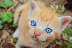 Blue eyed babe