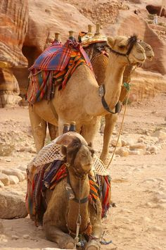 must ride a camel! in the desert....oh a memory of a lifetime...I hope they are as nice as they look in all the pictures! #treasuredtravel