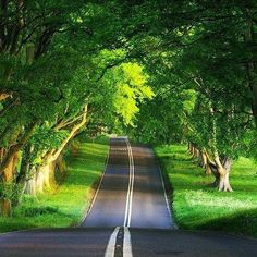 Oak Tree Rd Ireland