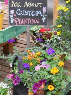 Ask us about Custom Plantings!  Plant Land, Kalispell, MT