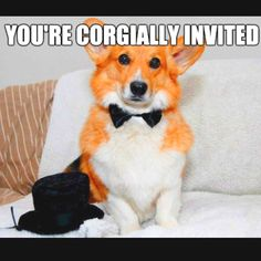 Corgially Invited...