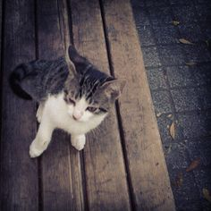 #cat #world #kitten #university #instagood #cat #world #kitten #university #instagood