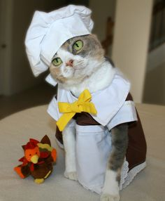 Happy Cats-Giving