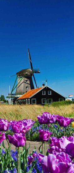 Zaanse Schans, Zaandijk, Netherlands