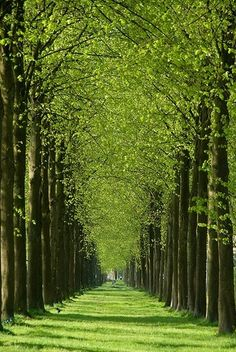 Tree Allee in Apeldoorn, Netherlands Beautiful World, Beautiful Places, Trees Beautiful, Tree Tunnel, Nature Pictures, Amazing Nature, Belle Photo, Beautiful Landscapes, Wonders Of The World
