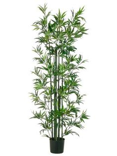 6' Bamboo Tree in Pot Green (Pack of 2) * Check this awesome product by going to the link at the image.