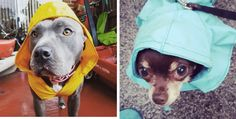 These pups are ready for some weather.