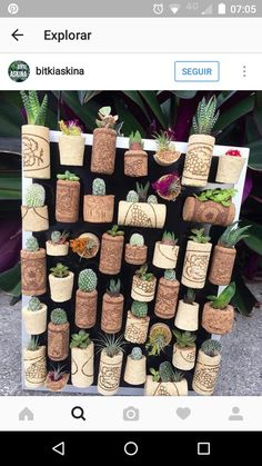 Shop online for all your Cactus and Succulent must haves.Very creative succulent wall🤗 Your next DIY project?How to Water Succulents – the Right Way - The Plant World Succulent Wall, Succulent Gardening, Cacti And Succulents, Planting Succulents, Cactus Plants, Propagate Succulents, Decoration Plante, Cork Art, Wine Cork Crafts