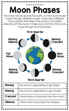 Science Posters and Anchor Charts 8th Grade Science, Middle School Science, Elementary Science, Science Classroom, Teaching Science, Science Education, Kindergarten Science, Physical Science, Preschool