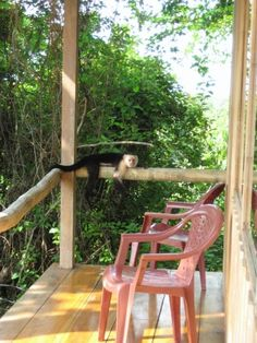 I love places where monkeys lay on your porch.    Montezuma, Costa Rica