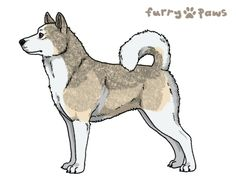 Furry Paws // AS Kip's Caverns of Time [lla 3xspd int 5HH 7hh GGFG] (Cream White(I) Black Grz. Light US) 2's Kennel