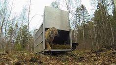 First Taste Of Freedom For 6 Overjoyed Animals Caught On Film   IFLScience