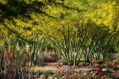 Sunnylands Center and Gardens,© Dillon Diers/The Office of James Burnett