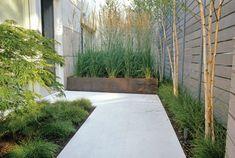 concrete can be beautiful - white concrete, birch, grasses, horizontal slat fence