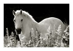 The unicorn which had lost its horn...  Photographed by Patrice Carre