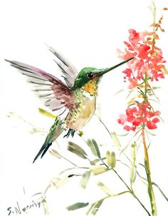 images of watercolor hummingbirds and flowers | Hummingbird, original watercolor painting, 14 X 11 in, flying ...
