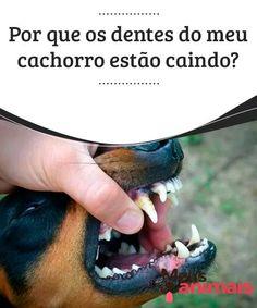 Por que os dentes do meu cachorro estão caindo?   A queda de dentes em cães pode ocorrer devido a doenças bucais, que geralmente estão relacionadas à falta de higiene e até mesmo à alimentação dos cães. Conheça neste artigo as doenças mais comuns: tártaro, gengivite e periodontite.